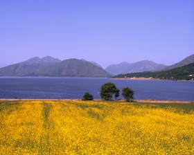 yellow_flowers_looking_onto_loch_linnhe_280x224.jpg